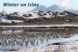Winter on Islay