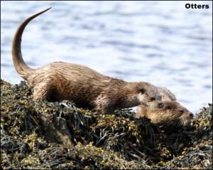 Otter14b