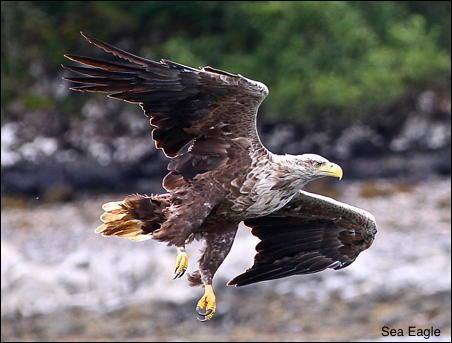 Sea Eagle 15