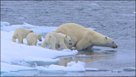 Polar Bears+3