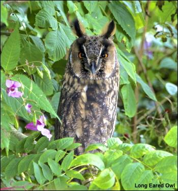 le-owl2016